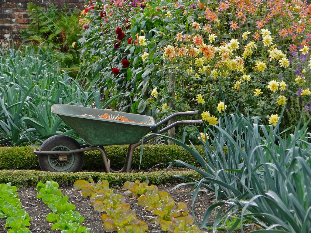 Цветы в огороде дизайн фото