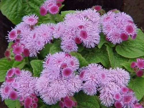 Какие цветы посадить в горшках на улице