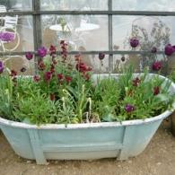 цветы в корыте