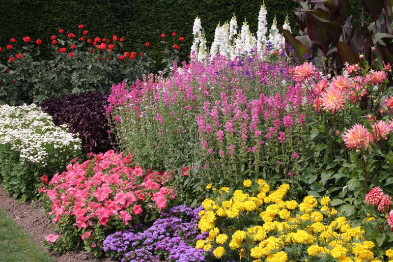 Выбор растений для миксбордера