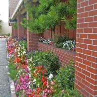 цветочный бордюр вдоль здания