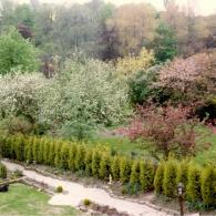 Живая изгородь из хвойных (Кипарисовик Лейланда, или Купрессоципарис)