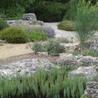 хвойные в композиции каменистого сада