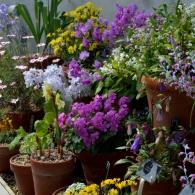 цветочная терасса