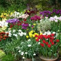 тюльпаны в кашпо