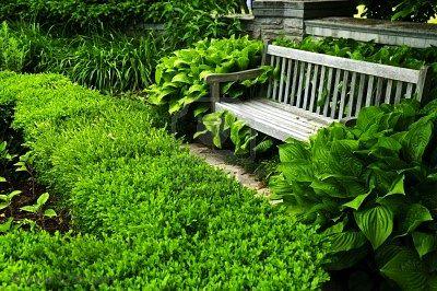 Как можно использовать живую изгородь