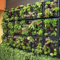 модульный сад в помещении