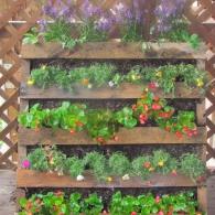 палетт с однолетними растениями