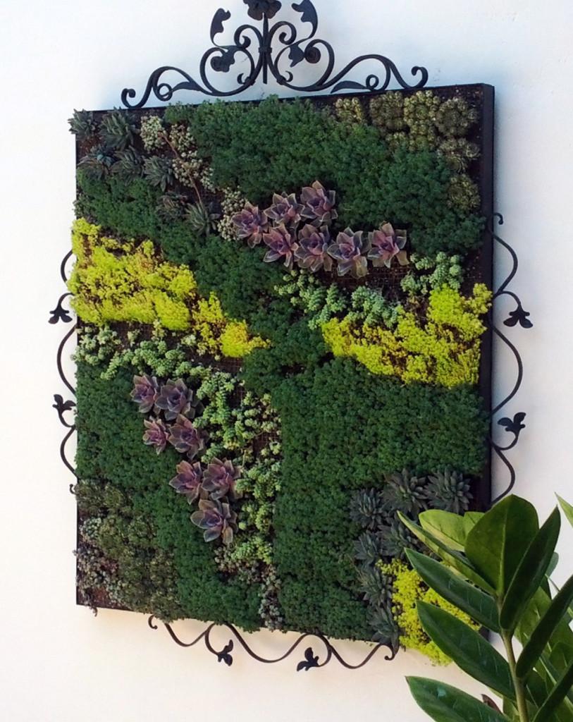 Живая картина из растений своими руками
