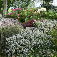 пряный сад на склоне