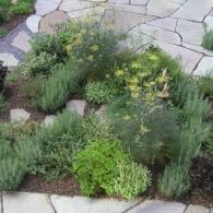 клумба с травами свободной формы