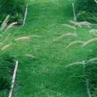 garden-grass-lawn-lg--gt_full_width_landscape