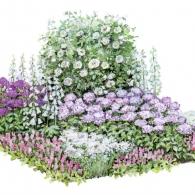 Цветник с флоксами и розами