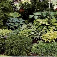 1_декоративно-лиственные растения_фото