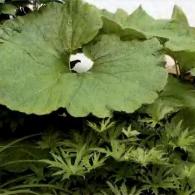11_декоративно-лиственные растения_фото