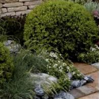 2_декоративно-лиственные растения_фото
