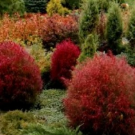5_декоративно-лиственные растения_фото