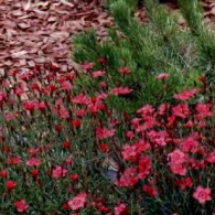 6_декоративно-лиственные растения_фото