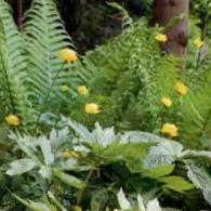 9_декоративно-лиственные растения_фото