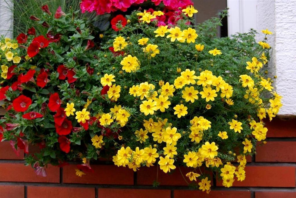 Ампельные комнатные растения фото Купить ампельные