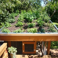 sedum-roof-chicken-coop