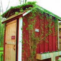 оформление туалета на даче вьющимися растениями
