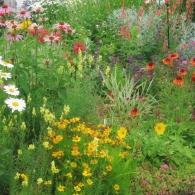 цветы в палисаднике