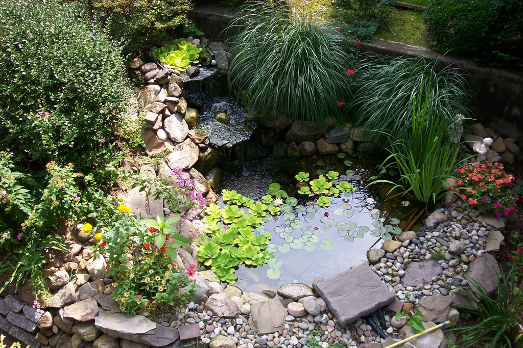 for Small ornamental fish ponds