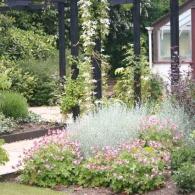 ароматные растения в саду