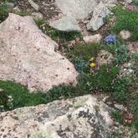 rock-garden_