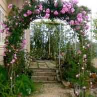 арка с плетистыми розами