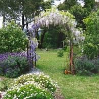 садовая арка с глицинией