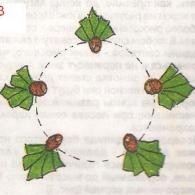 Схема посадки ирисов № 3