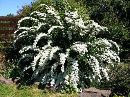 красивые многолетние цветы для клумбы фото