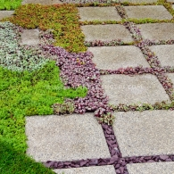 Stone Walkway and small plants