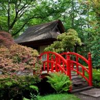 Декоративные деревья в японском саду
