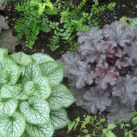 Shade_Brunnera&Heuchera
