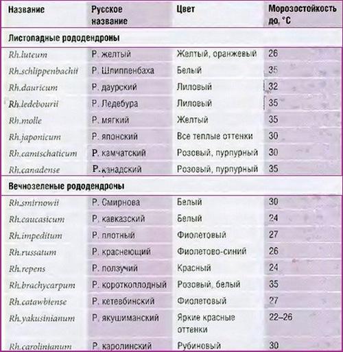 таблица зимостойких рододендронов
