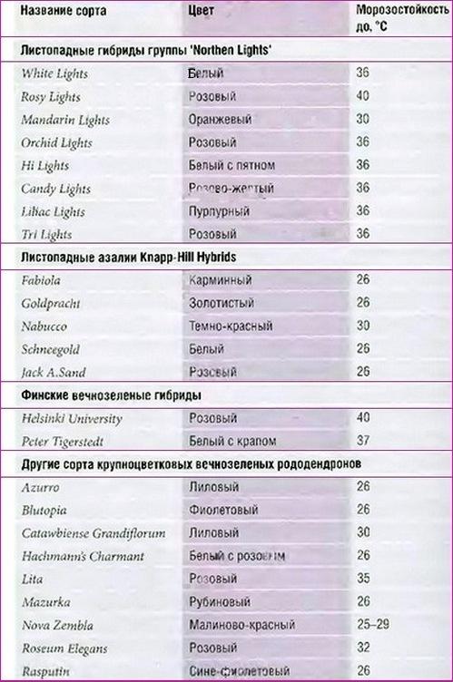 таблица зимостойкости сортовых рододендронов