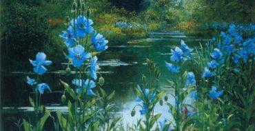 синий сад_фото