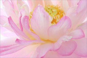 составление цветовых схем в саду_картинки