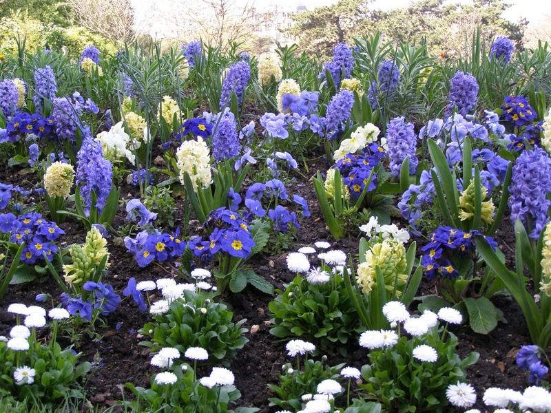 Синие и голубые тюльпаны 31 фото бывают ли они в природе Как покрасить тюльпаны в синий цвет