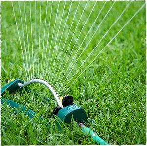 полив в засуху