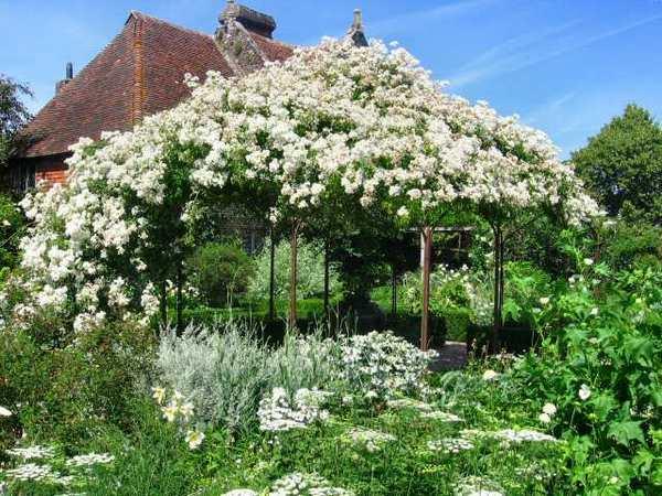 английский белый сад