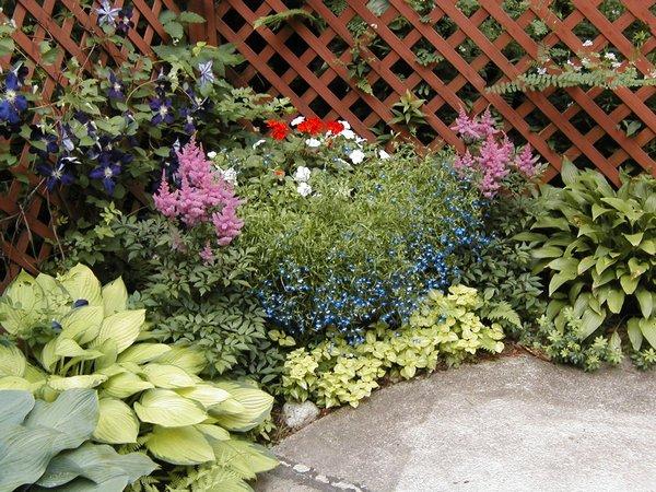 яснотка пятнистая в дизайне сада