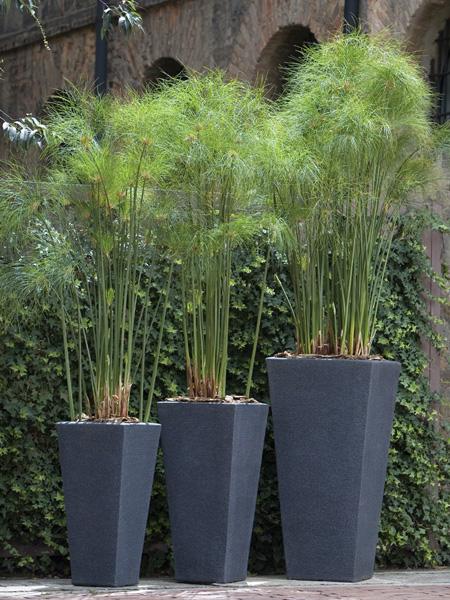 кадочные растения для декора террасы