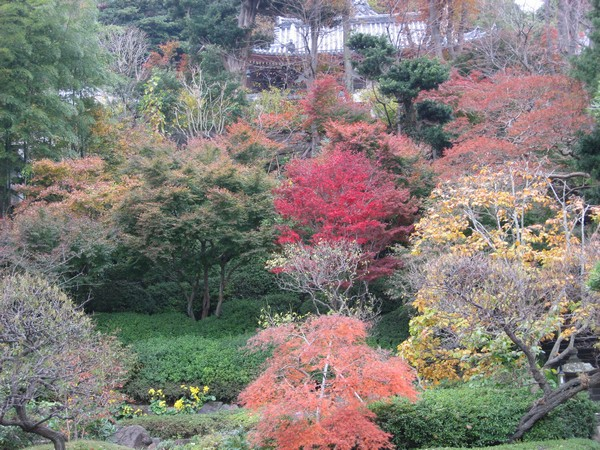 цветущий японский сад_фото