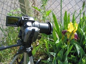 садовая фотография_фото
