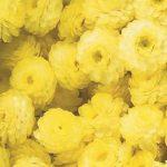 сухоцветы своими руками_фото