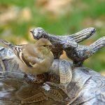 купальня для птиц_фото